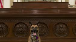 Elk Grove Police Dog, Blu, on the Assembly Floor